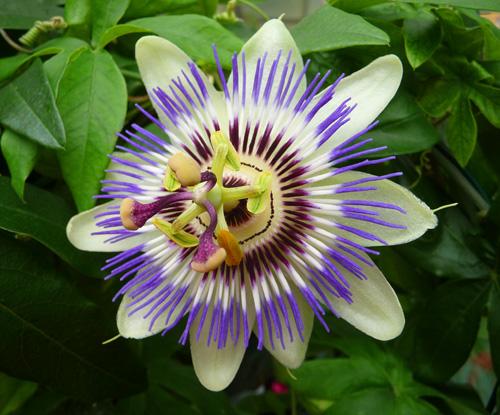 Fotograf a flores de primavera y verano 03 - Flores de verano ...