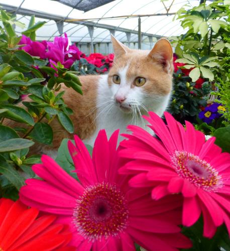 Marroncito entre las flores