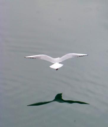 Gaviota en vuelo, 2013 (Foto: Paco Azanza Telletxiki)