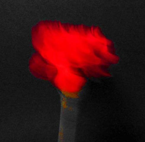 Clavel rojo, 2012 (Foto: Paco Azanza Telletxiki)