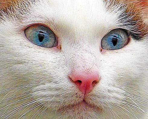 gatos-2-4-web